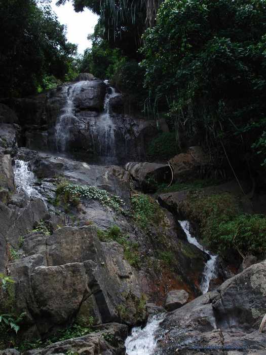photo 20 English dense forest and visit the surrounding waterfalls on Koh Samui in Thailand